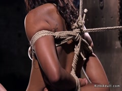 Ebony in hogtie suspension toyed